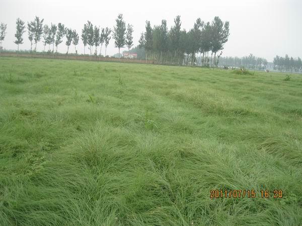 京兴润基园林绿化加盟