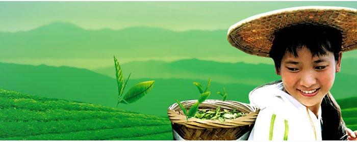 茗山生态茶加盟