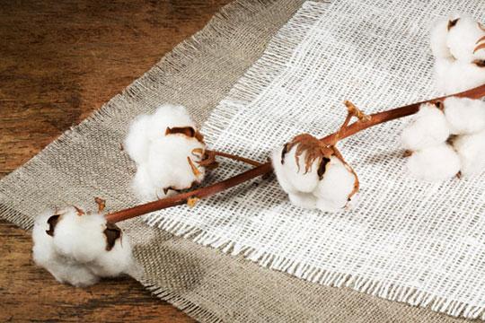 两宜织造棉品加盟产品图