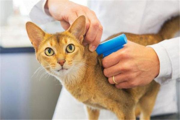 加盟一家宠物医院有什么运营技巧