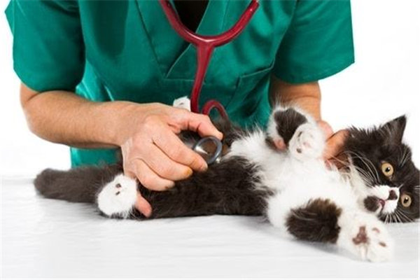 加盟一家宠物医院品牌店有发展前景吗