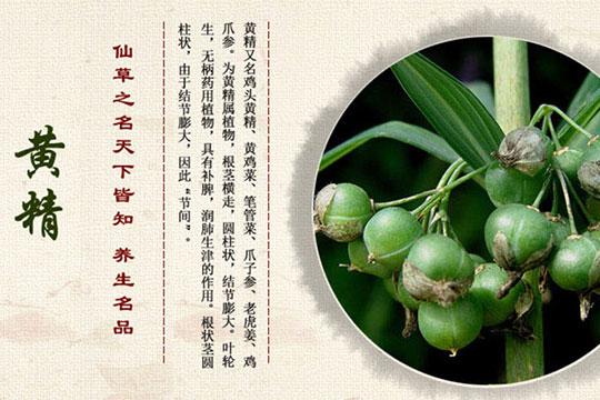 贵珍草种植-黄精