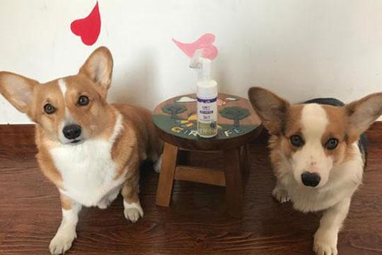 黏米宠物美容加盟图片