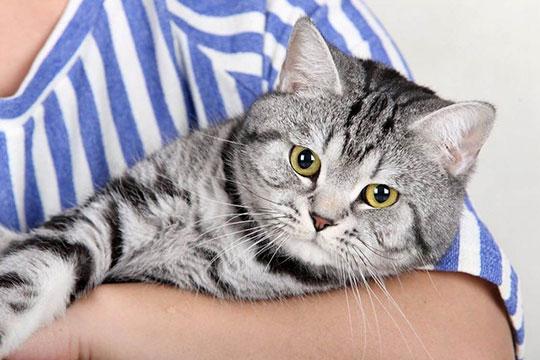 博烨宠物美容加盟图片