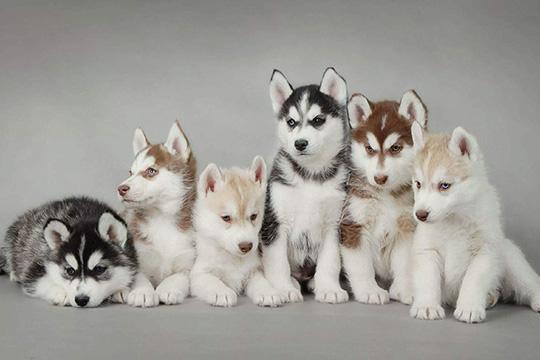 NEKO宠物护理生活馆加盟图片