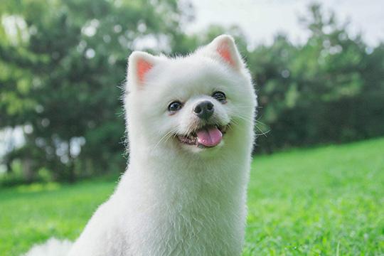 萌芝宠宠物美容加盟图片