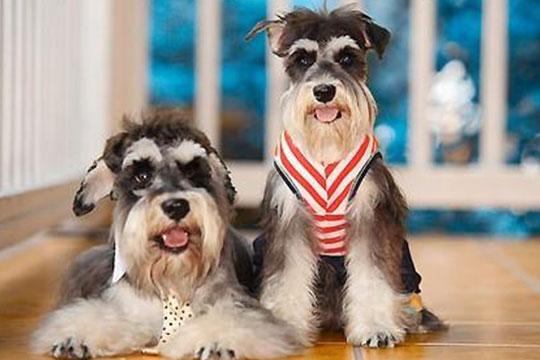 贝乐耶宠物店加盟展示图