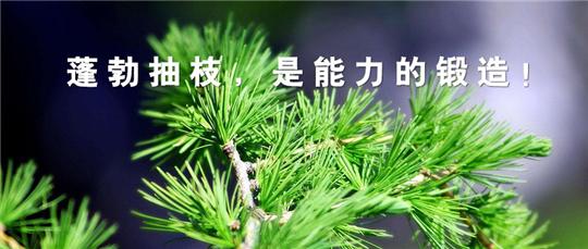 【标杆实录】西乡易尚国际成长记之工程与服务