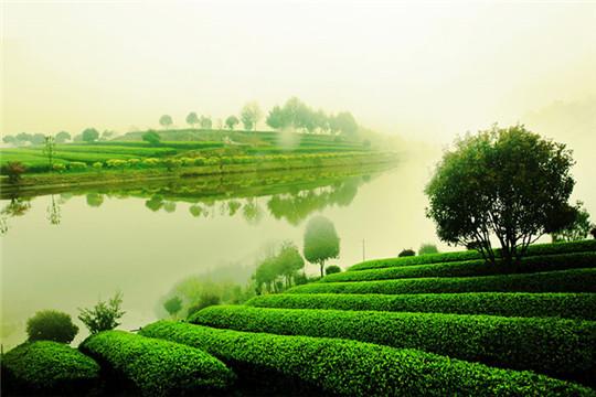 浩茗茶业加盟