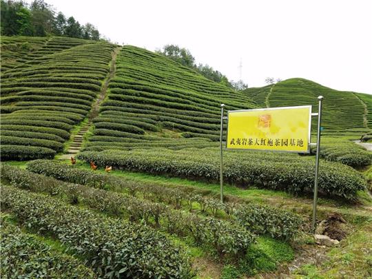 国内有名的茶叶店有哪些?