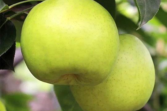 欣果坊水果