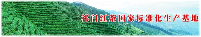 祁门红茶标准化生产基地