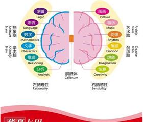 七田右脑记忆器