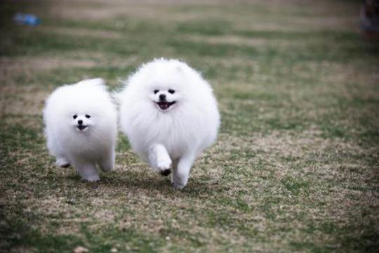 萌芝宠宠物美容加盟