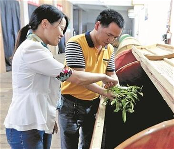安溪茶业技术培训