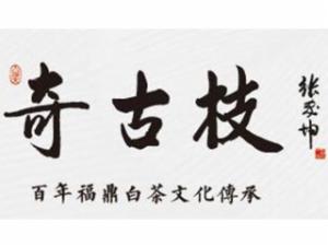 奇古枝福鼎白茶