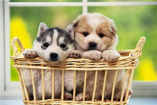 宠爱国际宠物医疗加盟