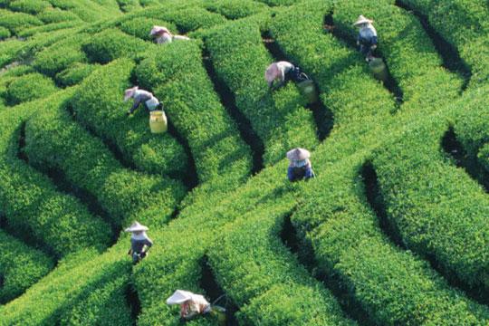 茶海棠饮品加盟