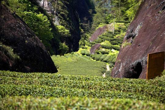 涧康茶业加盟