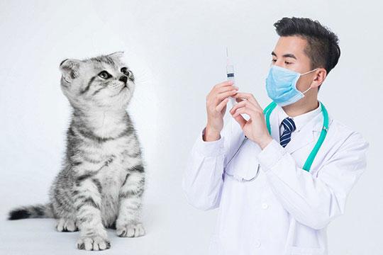 斯佩恩宠物医美加盟