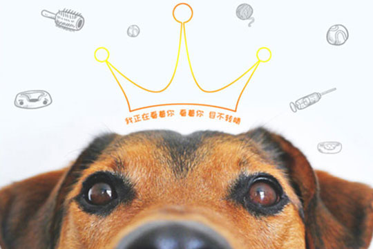 宠乐滋宠物店加盟